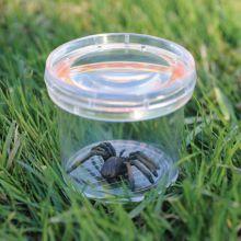 Hyönteislasi - Suurennuslasilla