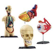 Anatomiamalli - 4 mallin  setti