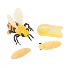 Elinkaari: Munasta hyönteiseksi - Hunajamehiläinen